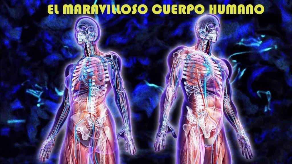 Cuerpo humano es maravilloso