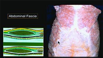 Fascia abdominal