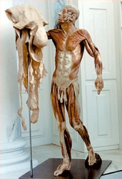Fascia del cuerpo entera