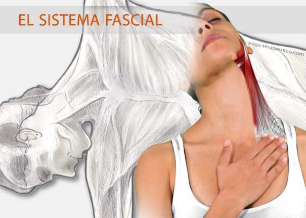 La fascia envuelve todo el cuerpo