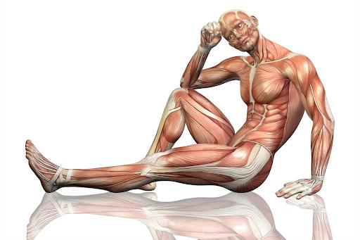 Fascia corporal externa