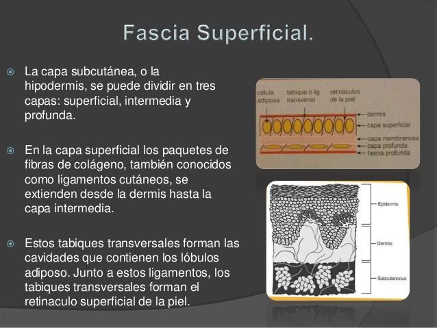Fascia superficial