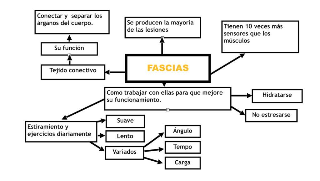 Tipos de fascias y funciones