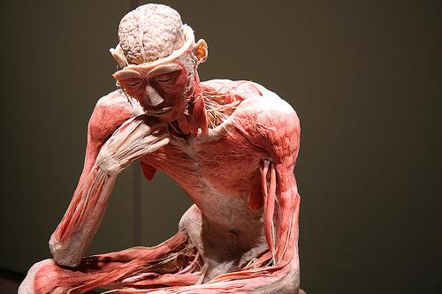 Fascia y cuerpo entero