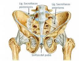 Ligamentos de la pelvis