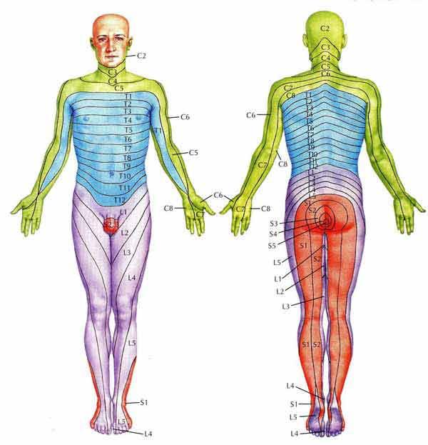 Lineas corporales transversas