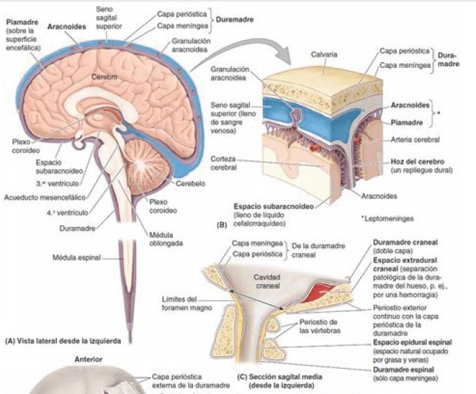 Cisternas cerebrales