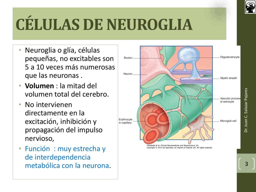 Célula Neuroglia