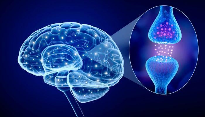 Neurotrasmisor y cerebro