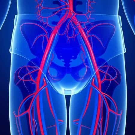 Pelvis sistema circulatorio
