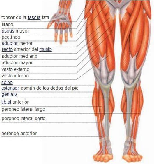 Pelvis, piernas y pies