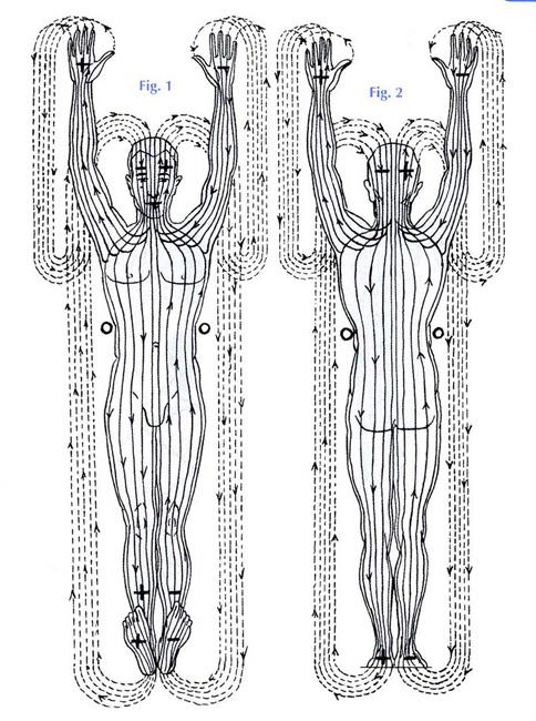 Polaridad lineas del cuerpo