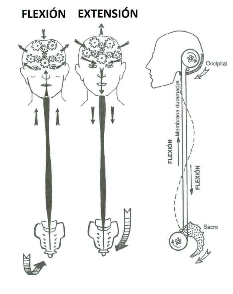 Respiración Cráneo Sacral