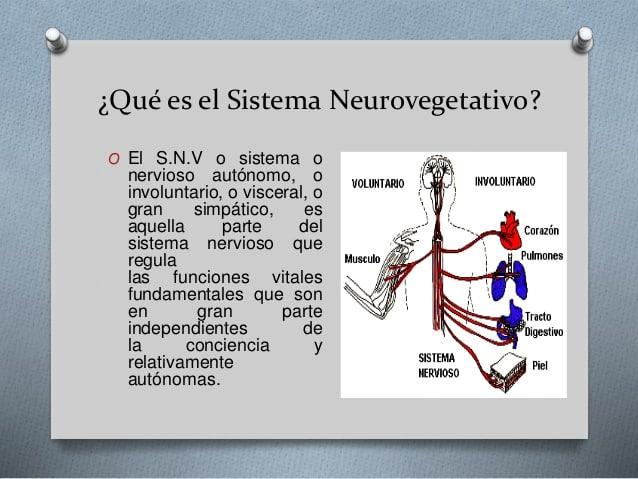 Sistema nervioso neuro vegetativo