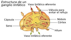 Ganglio linfático
