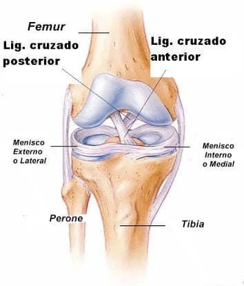 Ligamento de la rodilla